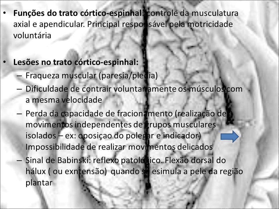 Funções do trato córtico-espinhal: controle da musculatura axial e apendicular. Principal responsável pela motricidade voluntária Lesões no trato córt