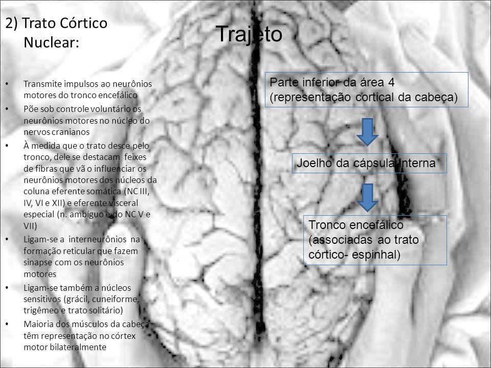 2) Trato Córtico Nuclear: Transmite impulsos ao neurônios motores do tronco encefálico Põe sob controle voluntário os neurônios motores no núcleo do n