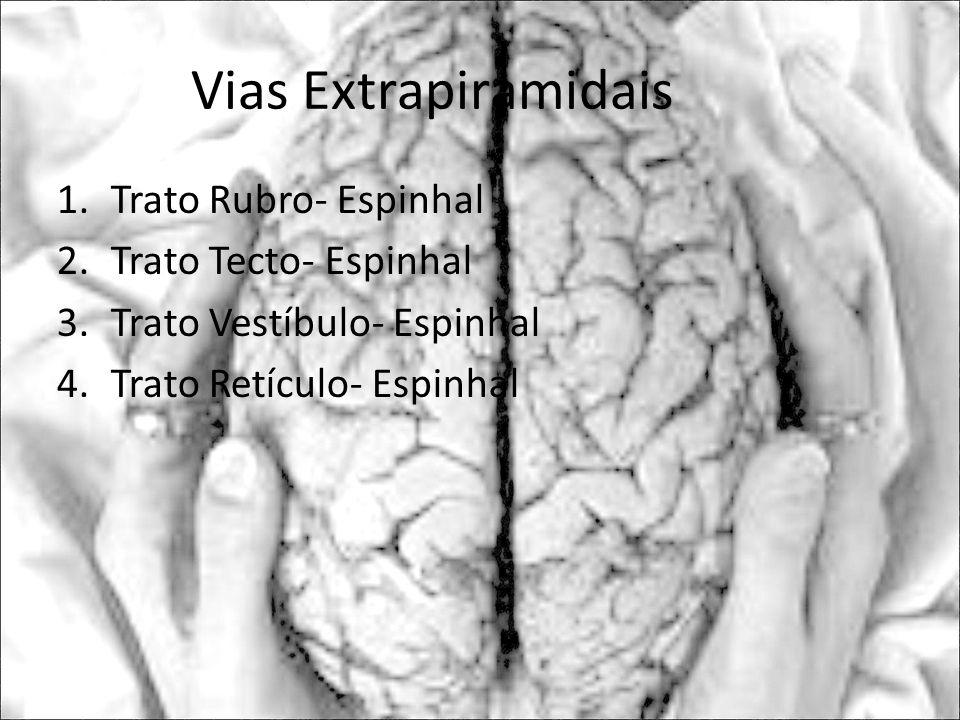 Vias Extrapiramidais 1.Trato Rubro- Espinhal 2.Trato Tecto- Espinhal 3.Trato Vestíbulo- Espinhal 4.Trato Retículo- Espinhal