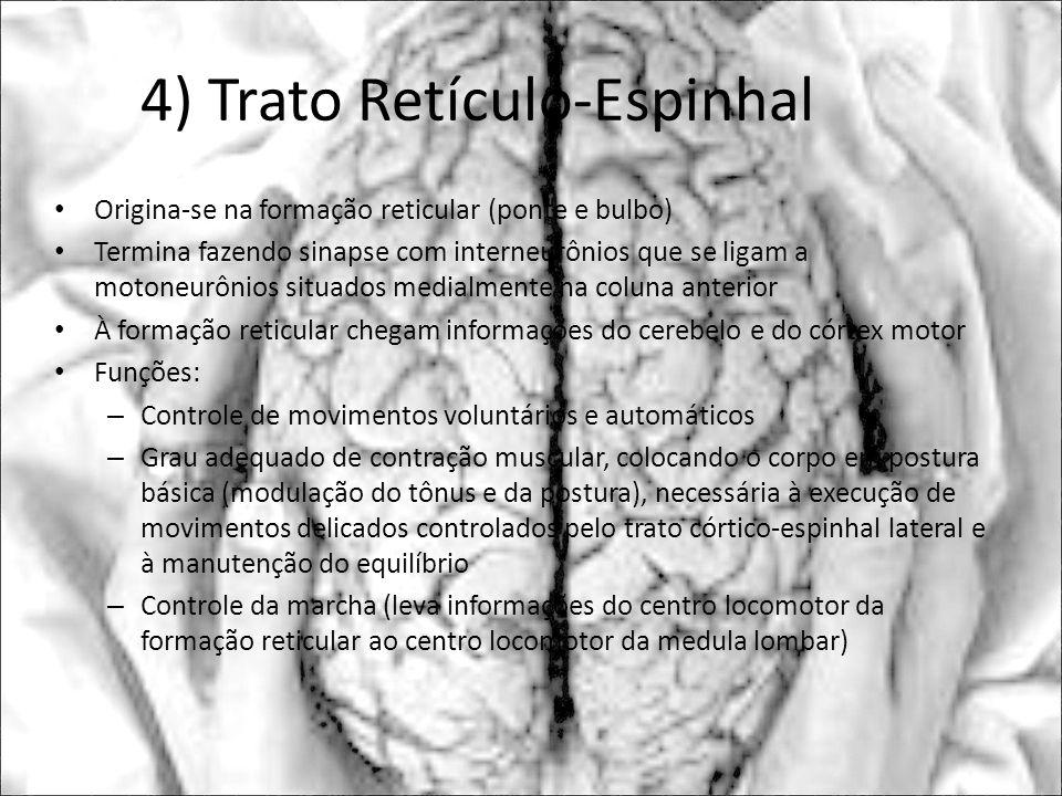 4) Trato Retículo-Espinhal Origina-se na formação reticular (ponte e bulbo) Termina fazendo sinapse com interneurônios que se ligam a motoneurônios si