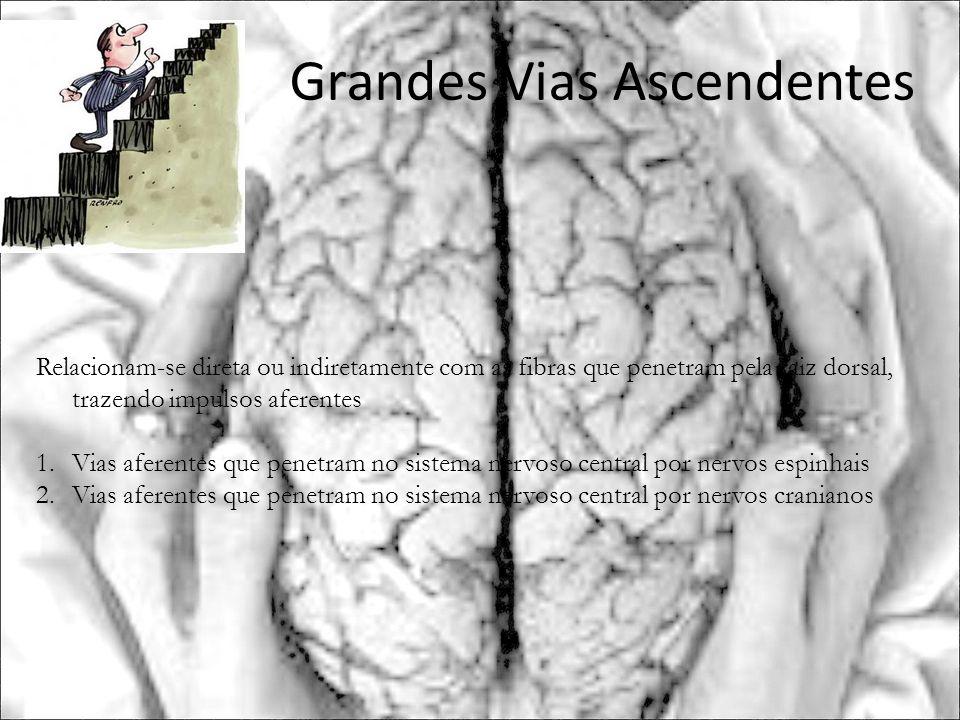 Grandes Vias Ascendentes Relacionam-se direta ou indiretamente com as fibras que penetram pela raiz dorsal, trazendo impulsos aferentes 1.Vias aferent