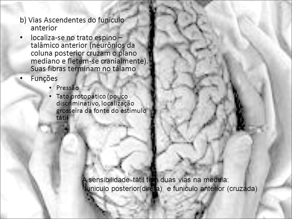 b) Vias Ascendentes do funículo anterior localiza-se no trato espino – talâmico anterior (neurônios da coluna posterior cruzam o plano mediano e flete