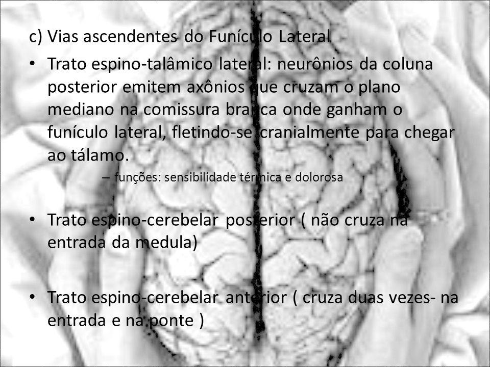 c) Vias ascendentes do Funículo Lateral Trato espino-talâmico lateral: neurônios da coluna posterior emitem axônios que cruzam o plano mediano na comi