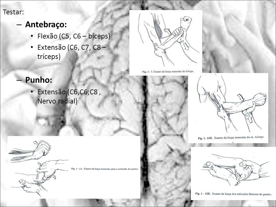 Testar: – Antebraço: Flexão (C5, C6 – bíceps) Extensão (C6, C7, C8 – tríceps) – Punho: Extensão (C6,C6,C8, Nervo radial)