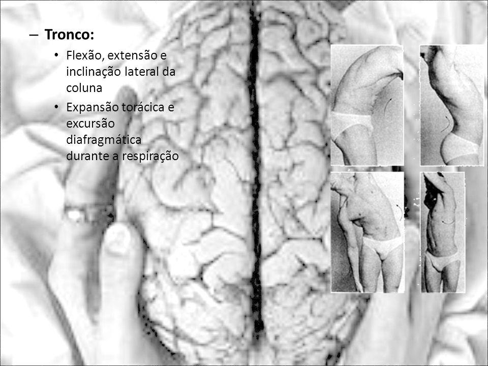 – Tronco: Flexão, extensão e inclinação lateral da coluna Expansão torácica e excursão diafragmática durante a respiração