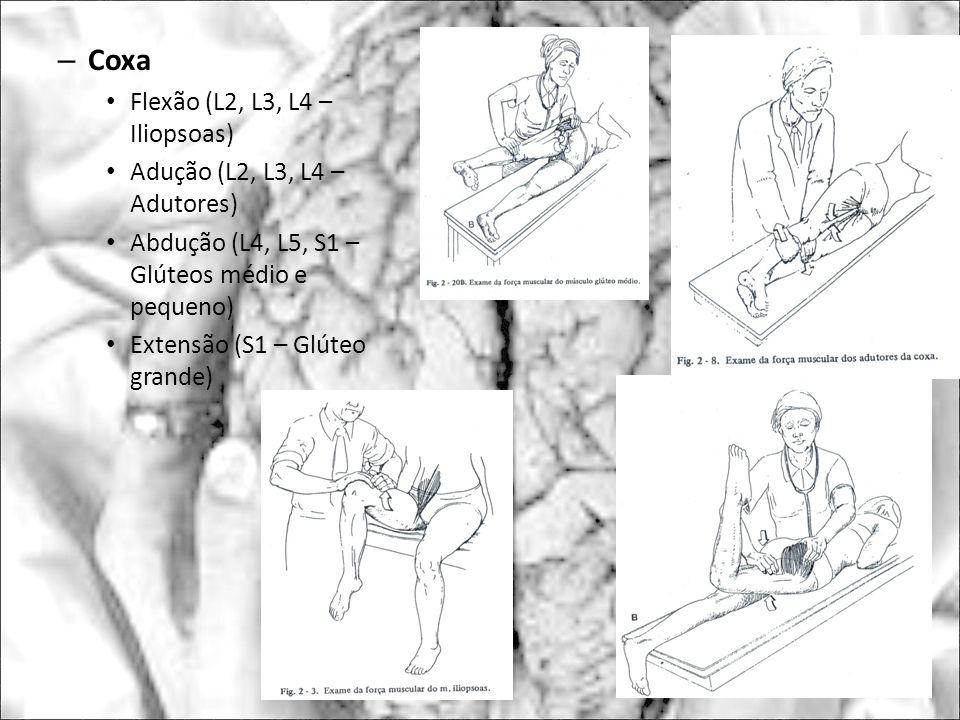 – Coxa Flexão (L2, L3, L4 – Iliopsoas) Adução (L2, L3, L4 – Adutores) Abdução (L4, L5, S1 – Glúteos médio e pequeno) Extensão (S1 – Glúteo grande)