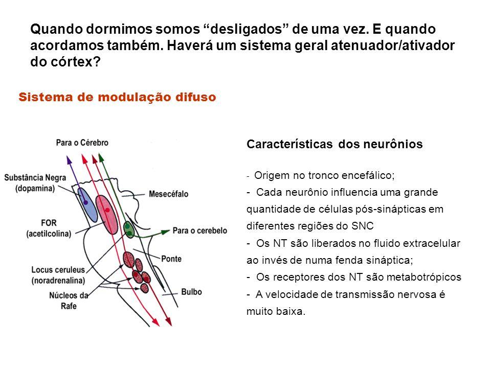 Características dos neurônios - Origem no tronco encefálico; - Cada neurônio influencia uma grande quantidade de células pós-sinápticas em diferentes