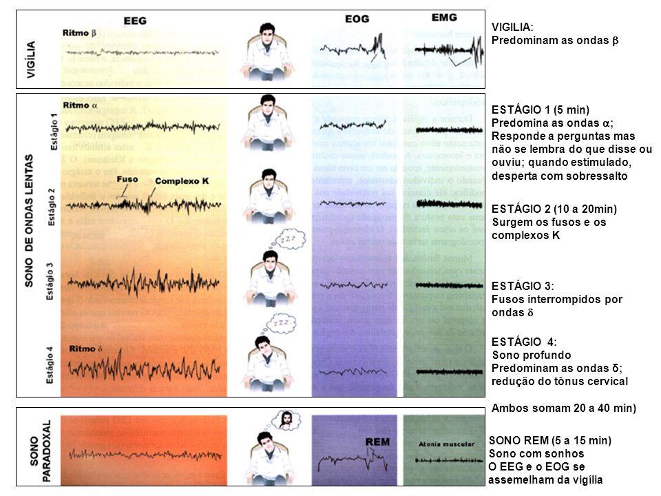 ESTÁGIO 1 (5 min) Predomina as ondas ; Responde a perguntas mas não se lembra do que disse ou ouviu; quando estimulado, desperta com sobressalto ESTÁG