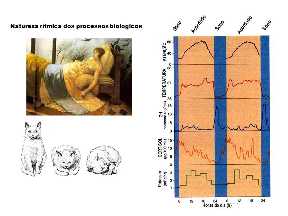 Natureza rítmica dos processos biológicos