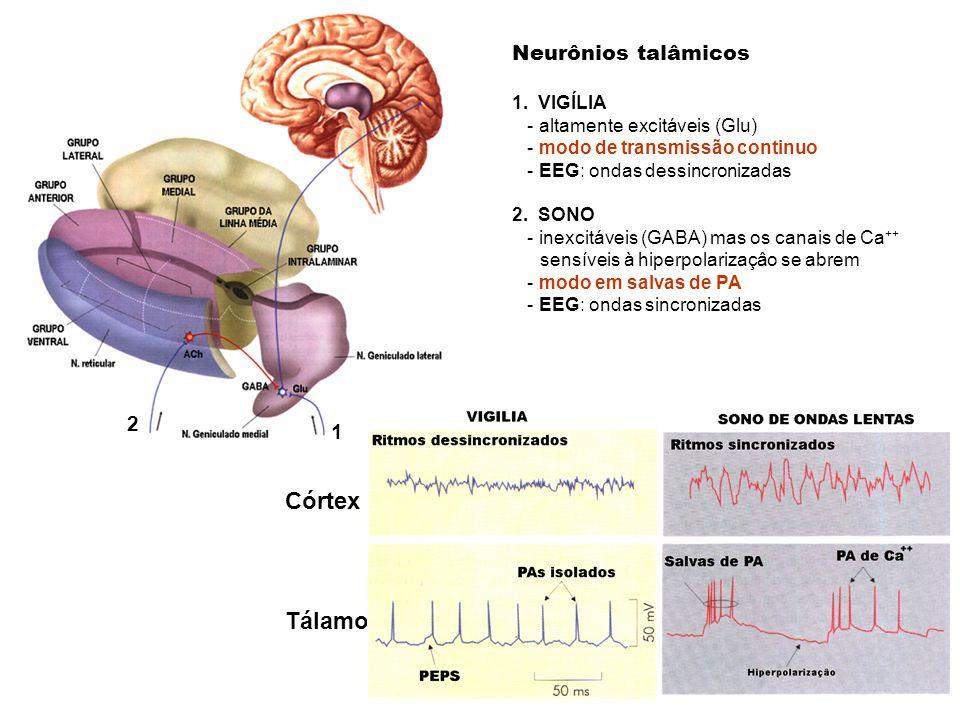 Neurônios talâmicos 1. VIGÍLIA - altamente excitáveis (Glu) - modo de transmissão continuo - EEG: ondas dessincronizadas 2. SONO - inexcitáveis (GABA)