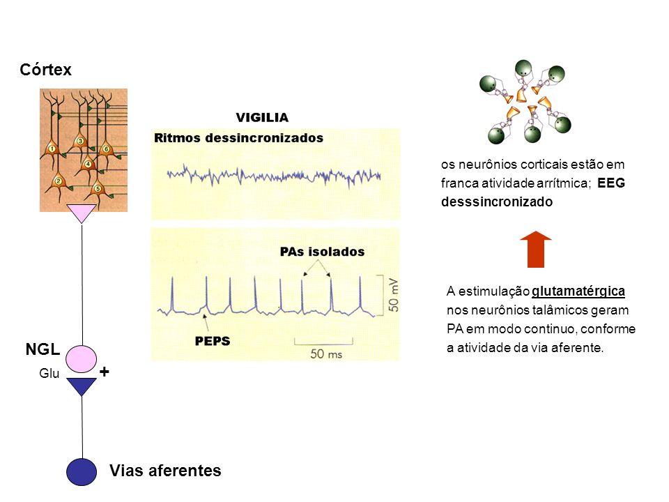 A estimulação glutamatérgica nos neurônios talâmicos geram PA em modo continuo, conforme a atividade da via aferente. os neurônios corticais estão em