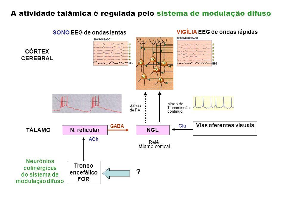 Vias aferentes visuais Glu Modo de Transmissão continuo VIGÍLIA EEG de ondas rápidas NGL TÁLAMO Relê tálamo-cortical CÓRTEX CEREBRAL Salvas de PA N. r