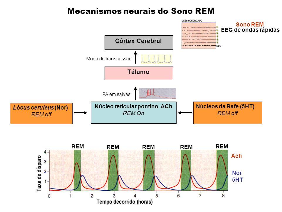 Mecanismos neurais do Sono REM Lócus ceruleus (Nor) REM off Núcleos da Rafe (5HT) REM off Núcleo reticular pontino ACh REM On Tálamo Córtex Cerebral P