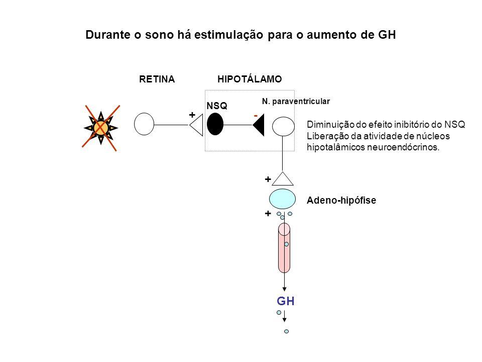 GH N. paraventricular NSQ RETINA HIPOTÁLAMO Adeno-hipófise + Diminuição do efeito inibitório do NSQ Liberação da atividade de núcleos hipotalâmicos ne