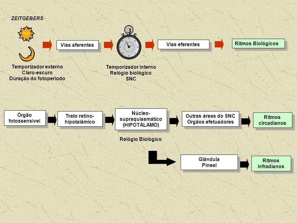 Ritmos Biológicos Vias eferentes Vias aferentes Temporizador externo Claro-escuro Duração do fotoperíodo Temporizador interno Relógio biológico SNC Re