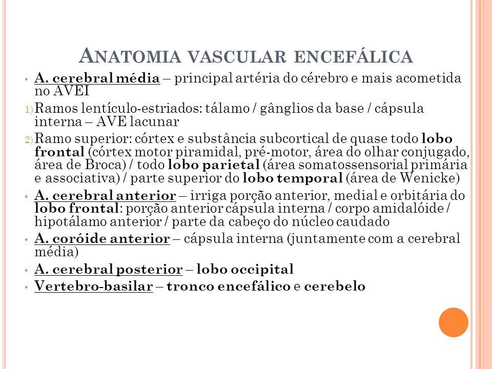 A NATOMIA VASCULAR ENCEFÁLICA A. cerebral média – principal artéria do cérebro e mais acometida no AVEI 1) Ramos lentículo-estriados: tálamo / gânglio