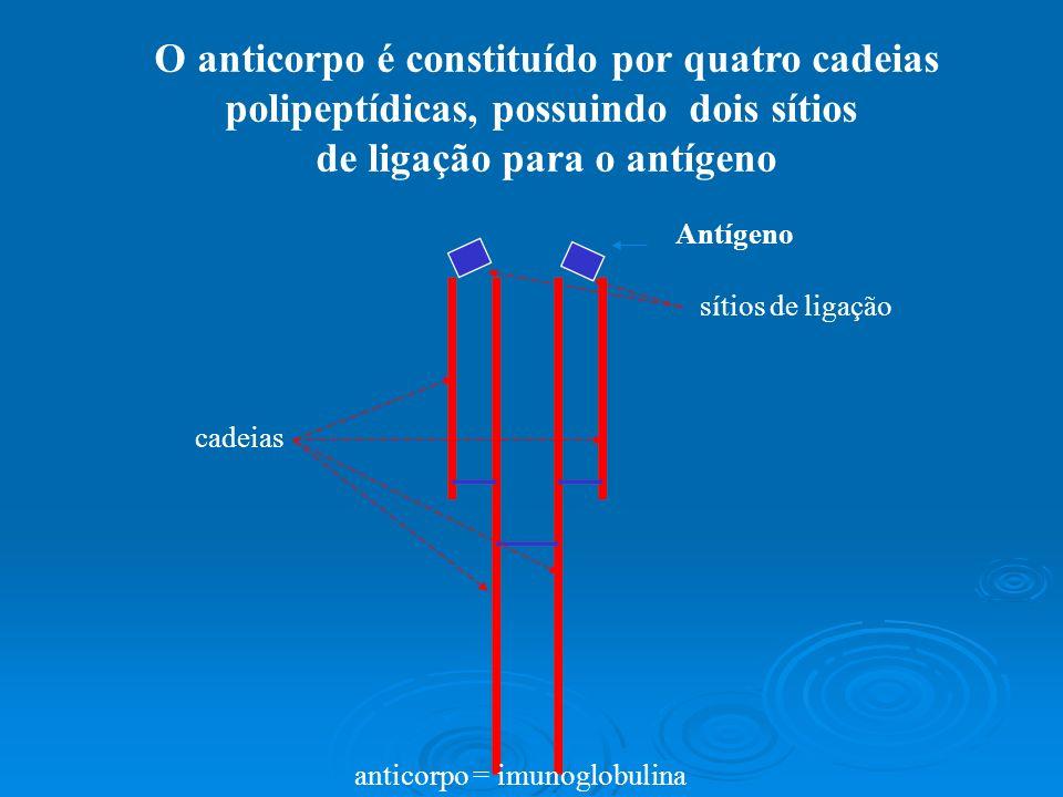 O anticorpo é formado de duas cadeias leves e duas cadeias pesadas unidas por pontes dissulfeto