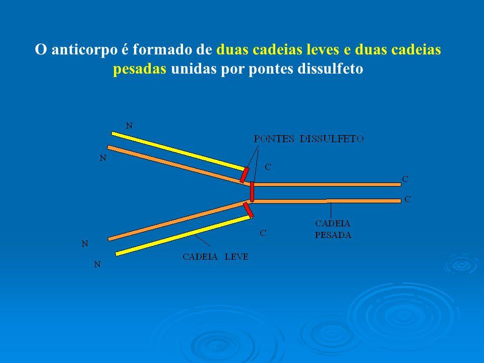 Cada cadeia leve possui um domínio variável e um constante.