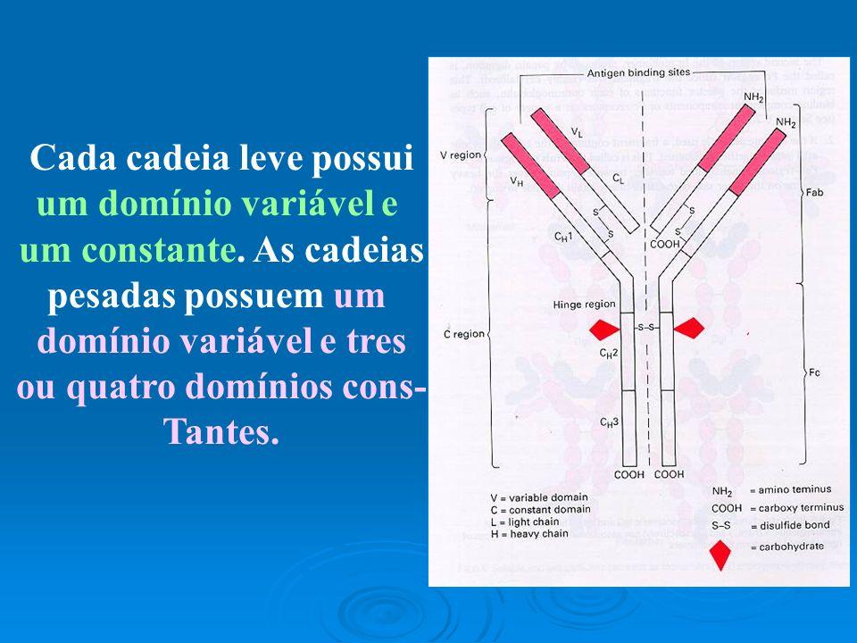 DOMÍNIO VARIÁVEL SÍTIO DE LIGAÇÃO DO ANTÍGENO.