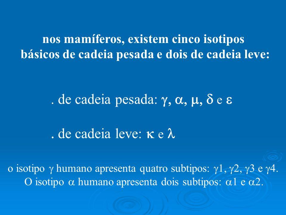 veja as cinco classes na espécie humana: IgG tem quatro subclasses: IgG1, IgG2, IgG3 e IgG4 IgA tem duas subclasses: IgA1 e IgA2