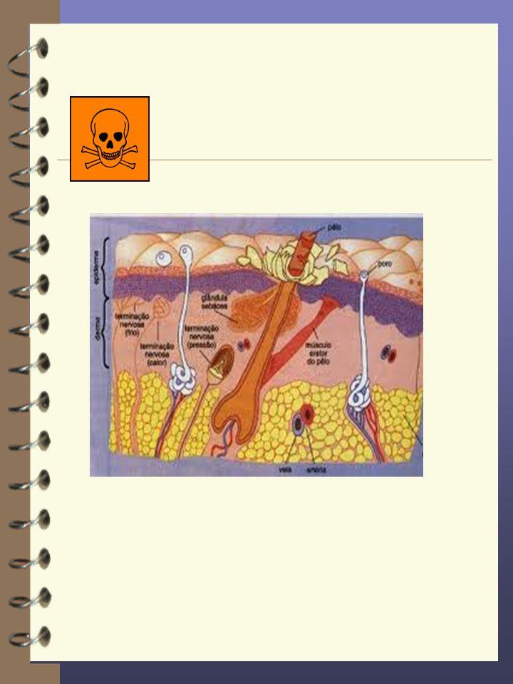 Tolerabilidade 4 Uma base de pomada não deve irritar a pele sadia ou ferida.