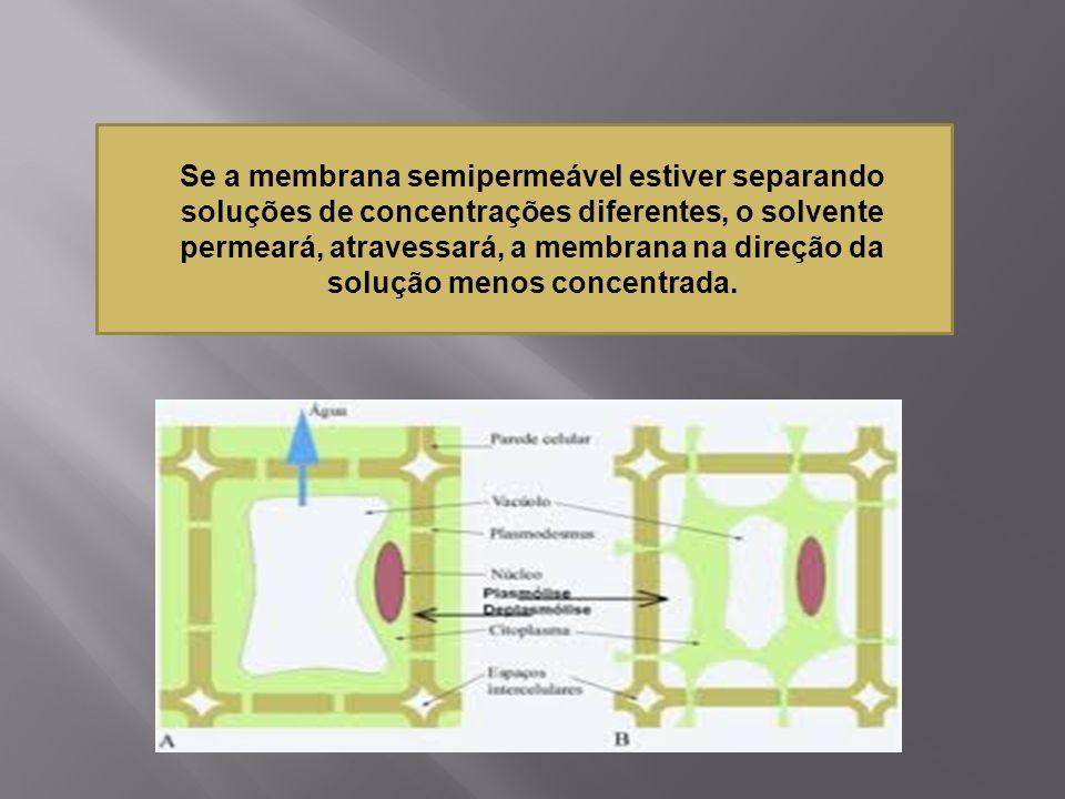 Se a membrana semipermeável estiver separando soluções de concentrações diferentes, o solvente permeará, atravessará, a membrana na direção da solução
