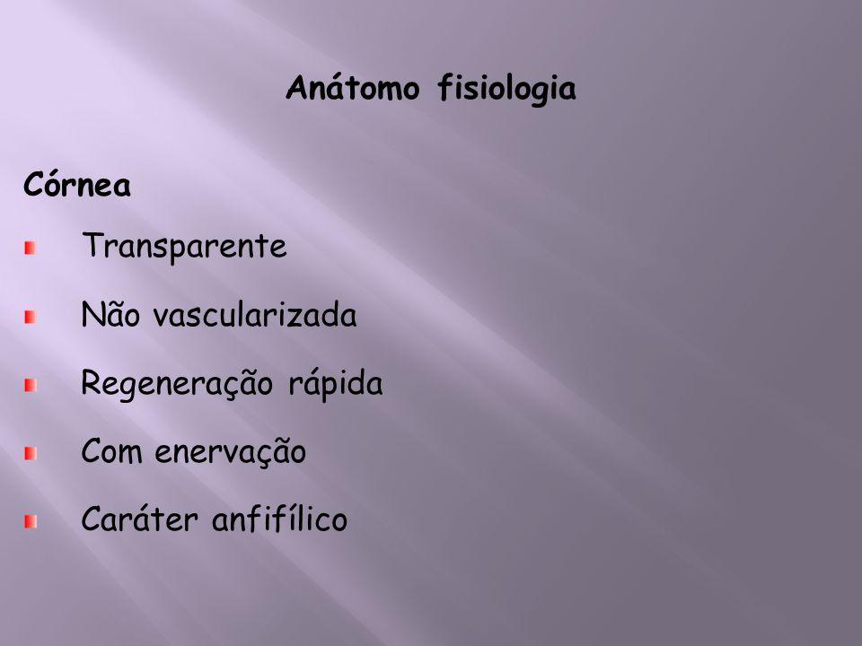 Anátomo fisiologia Córnea Transparente Não vascularizada Regeneração rápida Com enervação Caráter anfifílico