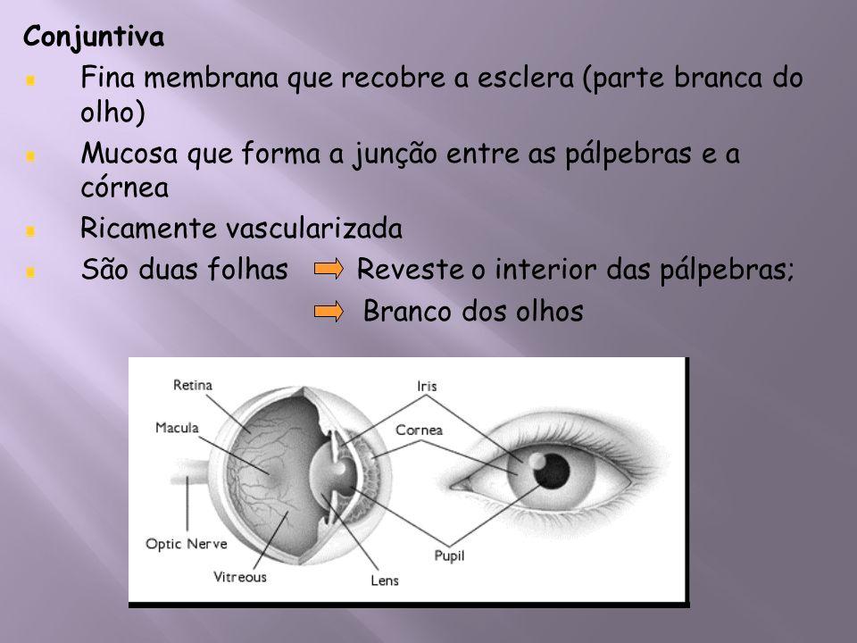 Conjuntiva Fina membrana que recobre a esclera (parte branca do olho) Mucosa que forma a junção entre as pálpebras e a córnea Ricamente vascularizada