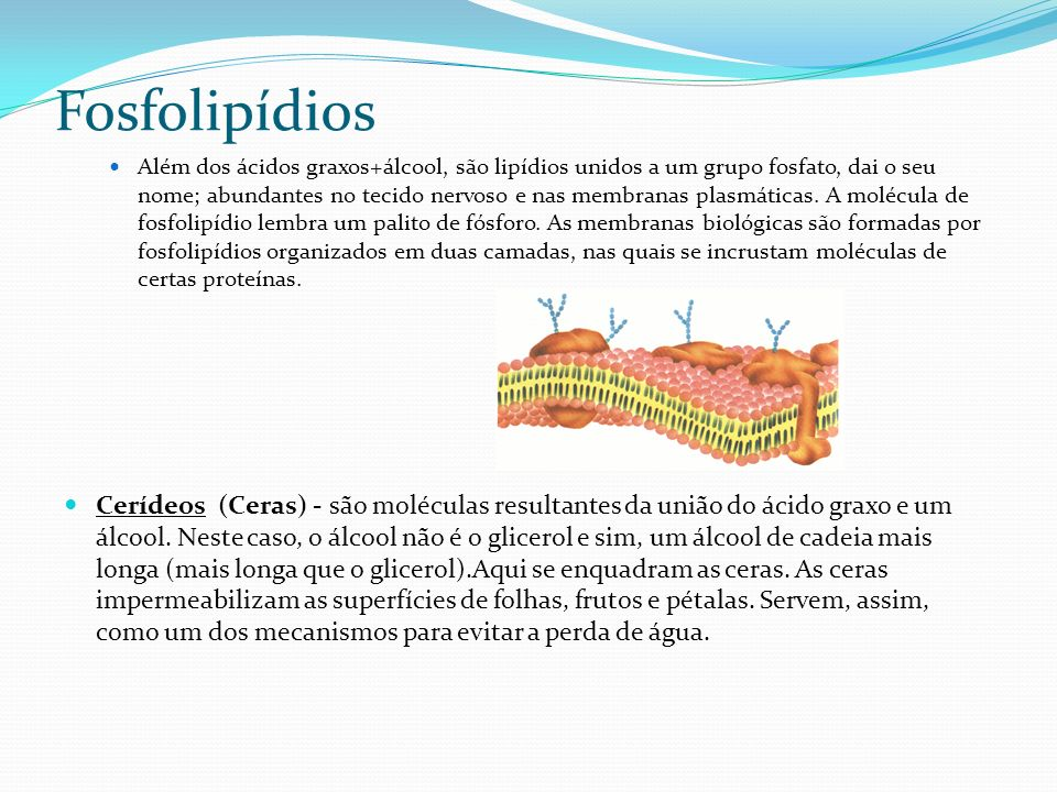 Fosfolipídios Além dos ácidos graxos+álcool, são lipídios unidos a um grupo fosfato, dai o seu nome; abundantes no tecido nervoso e nas membranas plas