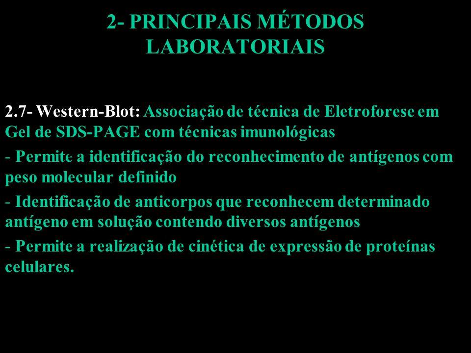 2- PRINCIPAIS MÉTODOS LABORATORIAIS 2.7- Western-Blot: Associação de técnica de Eletroforese em Gel de SDS-PAGE com técnicas imunológicas - Permite a