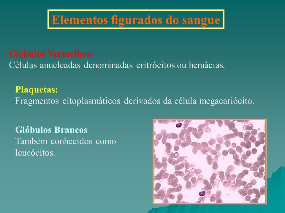 Elementos figurados do sangue Glóbulos Vermelhos: Células anucleadas denominadas eritrócitos ou hemácias. Plaquetas: Fragmentos citoplasmáticos deriva