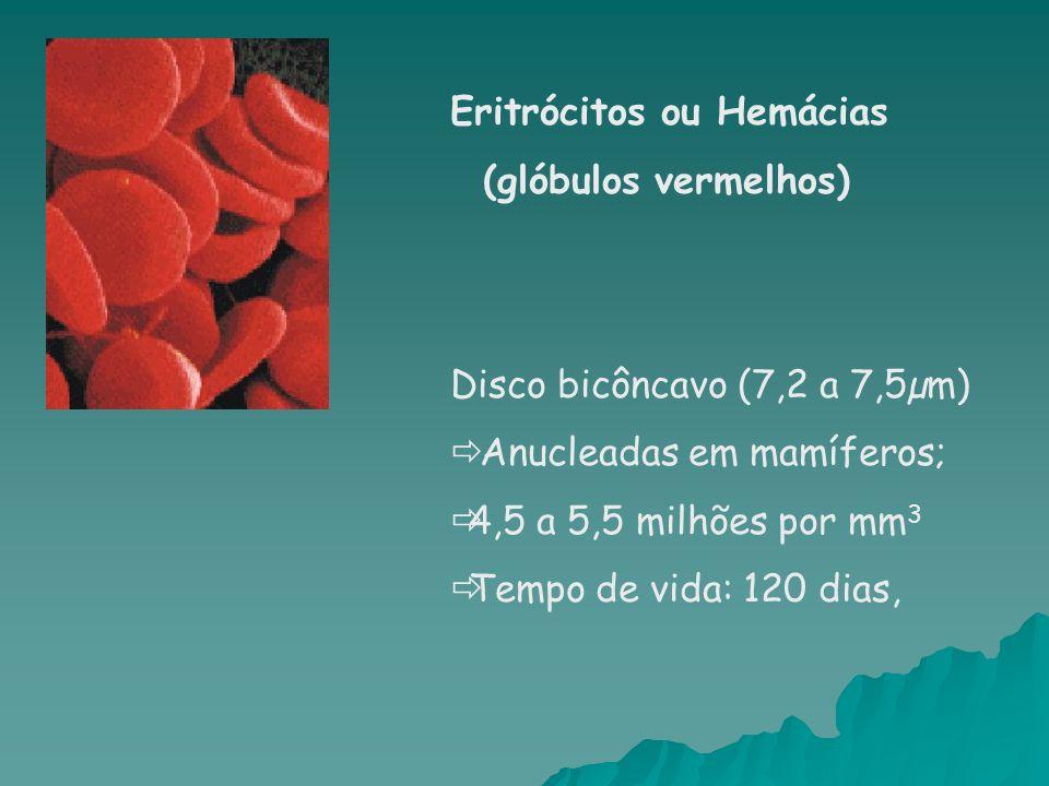 Eritrócitos ou Hemácias (glóbulos vermelhos) Disco bicôncavo (7,2 a 7,5µm) Anucleadas em mamíferos; 4,5 a 5,5 milhões por mm 3 Tempo de vida: 120 dias