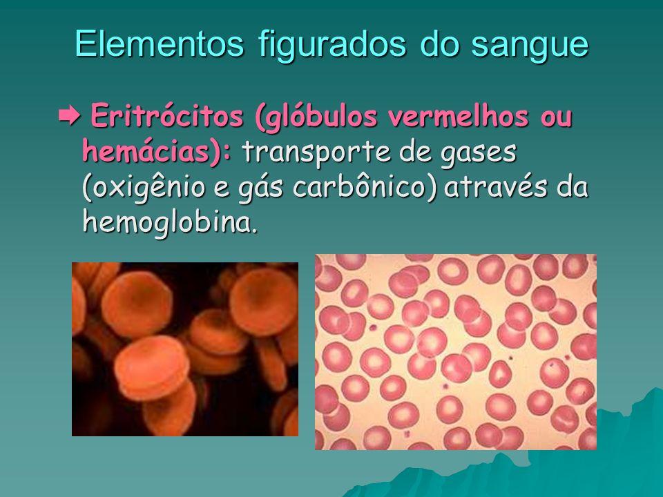 Elementos figurados do sangue Eritrócitos (glóbulos vermelhos ou hemácias): transporte de gases (oxigênio e gás carbônico) através da hemoglobina. Eri