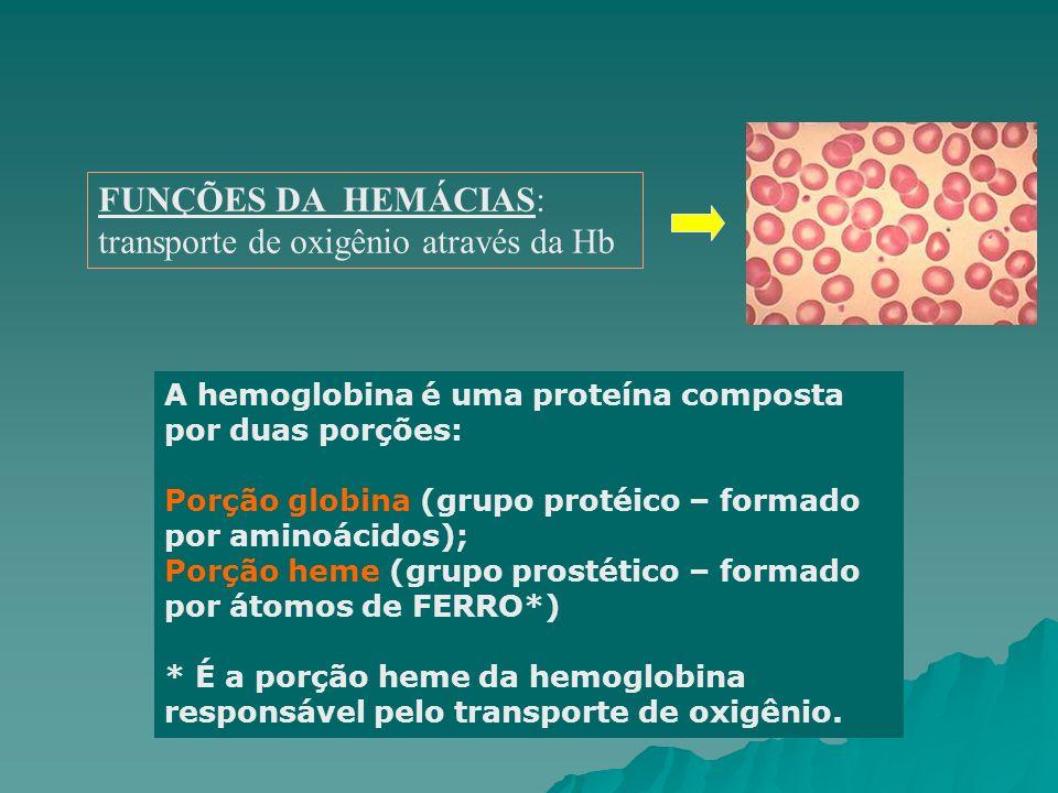FUNÇÕES DA HEMÁCIAS: transporte de oxigênio através da Hb A hemoglobina é uma proteína composta por duas porções: Porção globina (grupo protéico – for