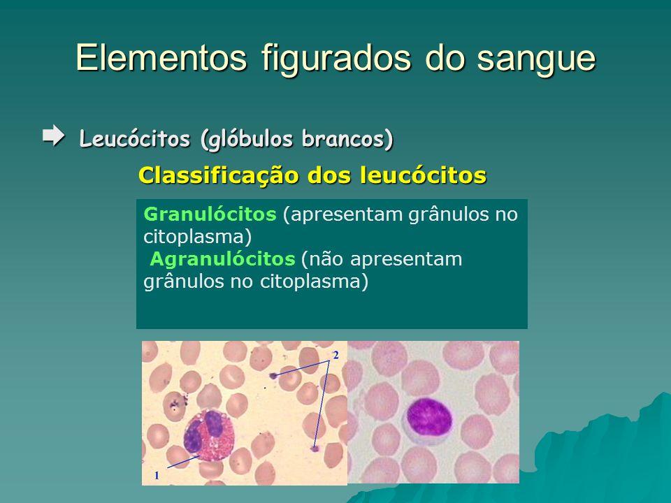 Elementos figurados do sangue Leucócitos (glóbulos brancos) Leucócitos (glóbulos brancos) Classificação dos leucócitos Granulócitos (apresentam grânul