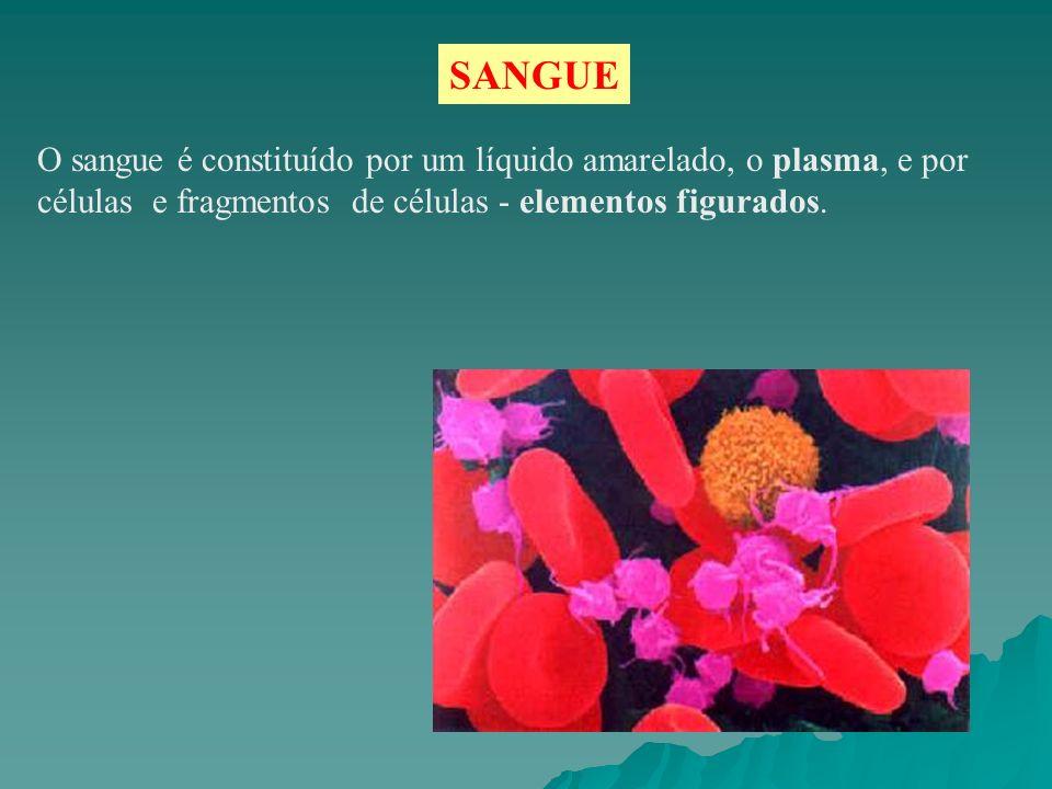 O sangue é constituído por um líquido amarelado, o plasma, e por células e fragmentos de células - elementos figurados. SANGUE