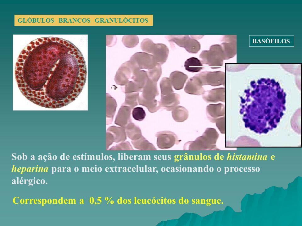 GLÓBULOS BRANCOS GRANULÓCITOS Sob a ação de estímulos, liberam seus grânulos de histamina e heparina para o meio extracelular, ocasionando o processo