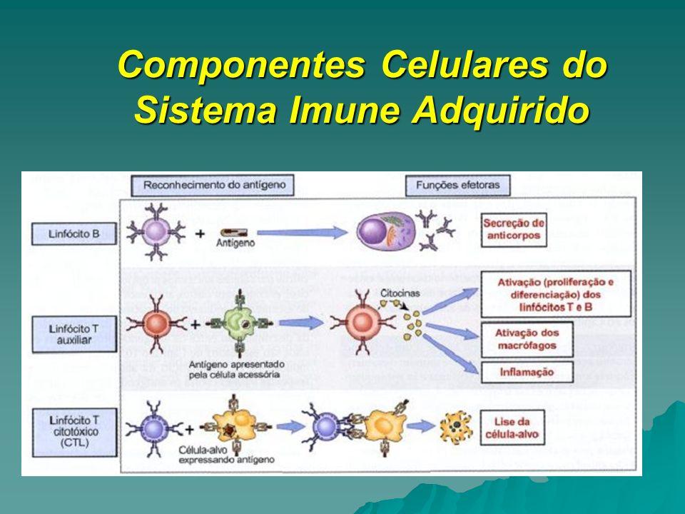 Componentes Celulares do Sistema Imune Adquirido