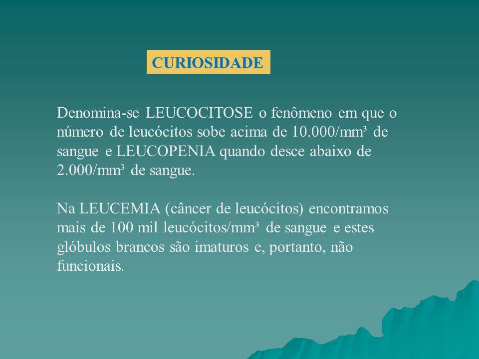 Denomina-se LEUCOCITOSE o fenômeno em que o número de leucócitos sobe acima de 10.000/mm³ de sangue e LEUCOPENIA quando desce abaixo de 2.000/mm³ de s