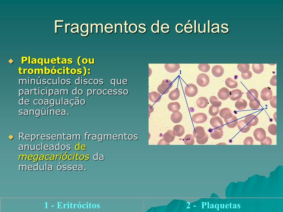 Fragmentos de células Plaquetas (ou trombócitos): minúsculos discos que participam do processo de coagulação sangüínea. Plaquetas (ou trombócitos): mi