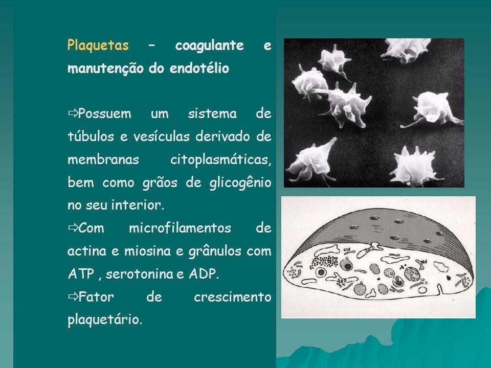 Plaquetas – coagulante e manutenção do endotélio Possuem um sistema de túbulos e vesículas derivado de membranas citoplasmáticas, bem como grãos de gl