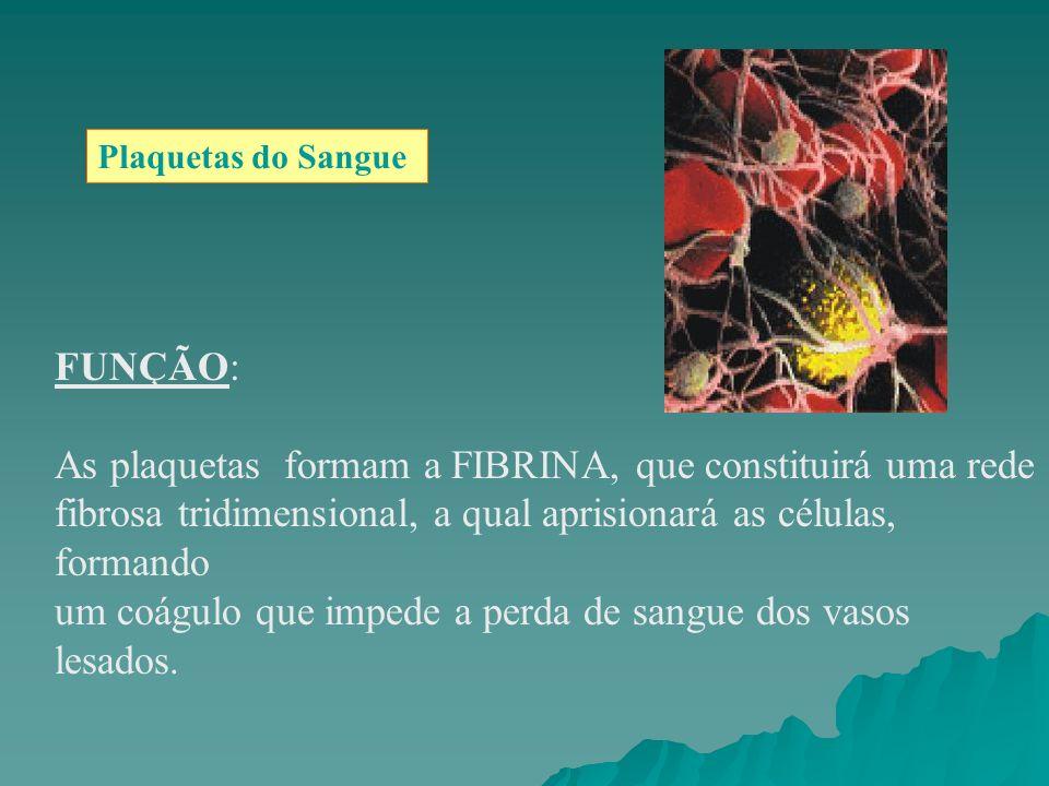 Plaquetas do Sangue FUNÇÃO: As plaquetas formam a FIBRINA, que constituirá uma rede fibrosa tridimensional, a qual aprisionará as células, formando um