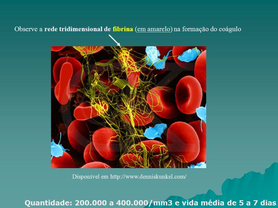 Disponível em http://www.denniskunkel.com/ Observe a rede tridimensional de fibrina (em amarelo) na formação do coágulo Quantidade: 200.000 a 400.000/
