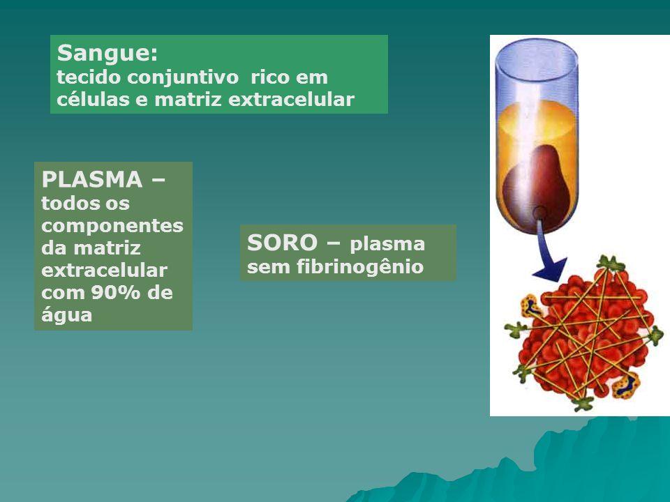 Sangue: tecido conjuntivo rico em células e matriz extracelular PLASMA – todos os componentes da matriz extracelular com 90% de água SORO – plasma sem