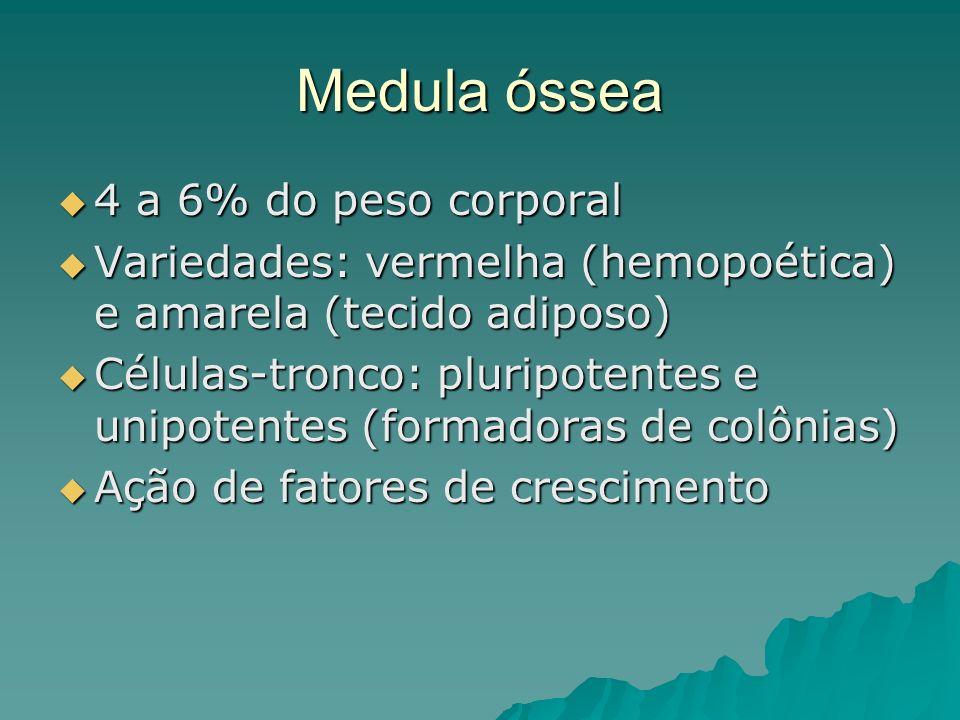 Medula óssea 4 a 6% do peso corporal 4 a 6% do peso corporal Variedades: vermelha (hemopoética) e amarela (tecido adiposo) Variedades: vermelha (hemop
