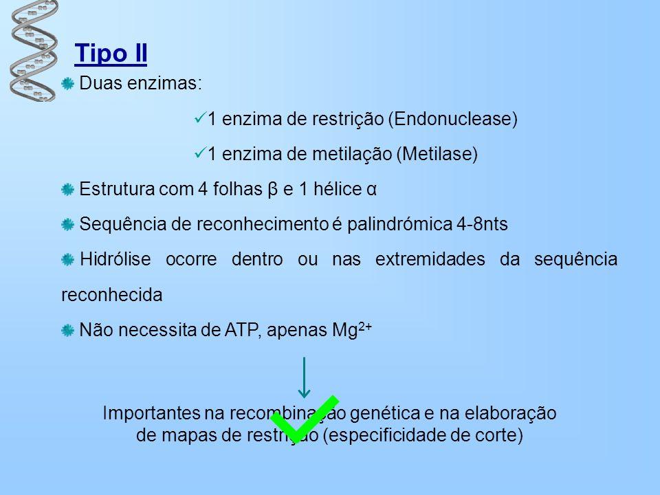 Tipo II Duas enzimas: 1 enzima de restrição (Endonuclease) 1 enzima de metilação (Metilase) Estrutura com 4 folhas β e 1 hélice α Sequência de reconhe