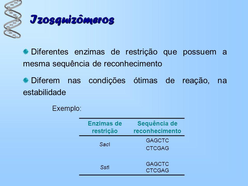 Izosquizômeros Diferentes enzimas de restrição que possuem a mesma sequência de reconhecimento Diferem nas condições ótimas de reação, na estabilidade