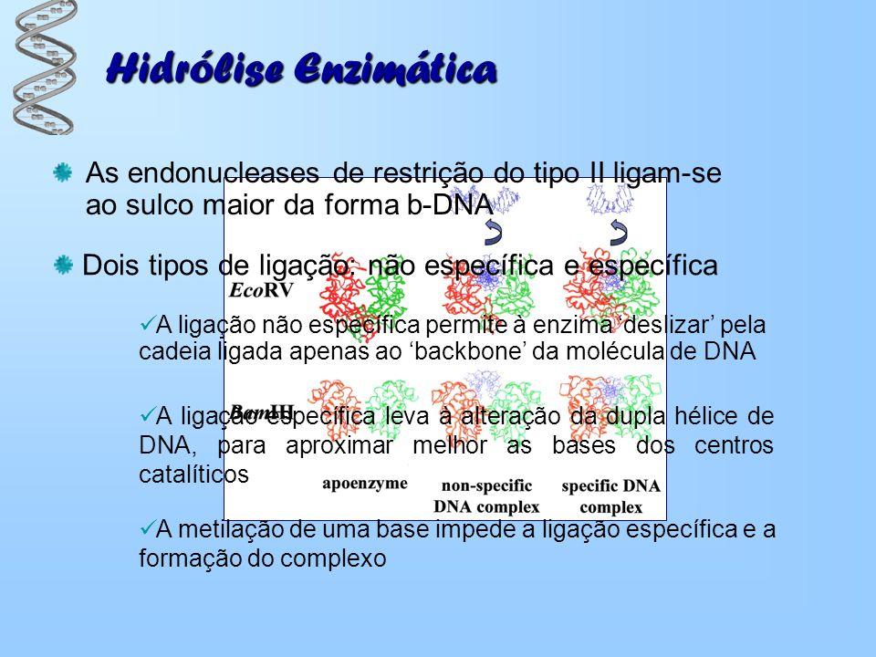 Hidrólise Enzimática As endonucleases de restrição do tipo II ligam-se ao sulco maior da forma b-DNA A ligação não específica permite à enzima desliza
