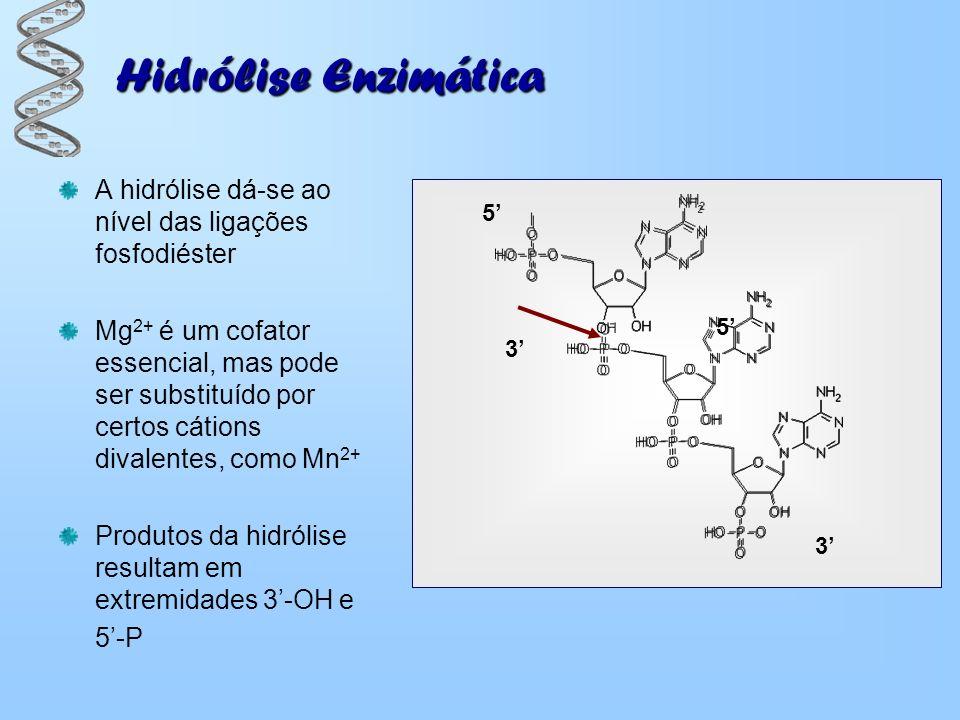 Hidrólise Enzimática A hidrólise dá-se ao nível das ligações fosfodiéster Mg 2+ é um cofator essencial, mas pode ser substituído por certos cátions di