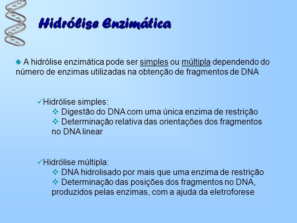 A hidrólise enzimática pode ser simples ou múltipla dependendo do número de enzimas utilizadas na obtenção de fragmentos de DNA Hidrólise múltipla: DN